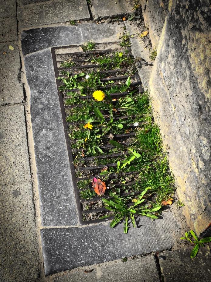 Bebloemd. Leuven, Andreas Vesaliusstraat, 16 april 2015, Foto Hendrik Elie Vanden Abeele. Te Voet in de Stad