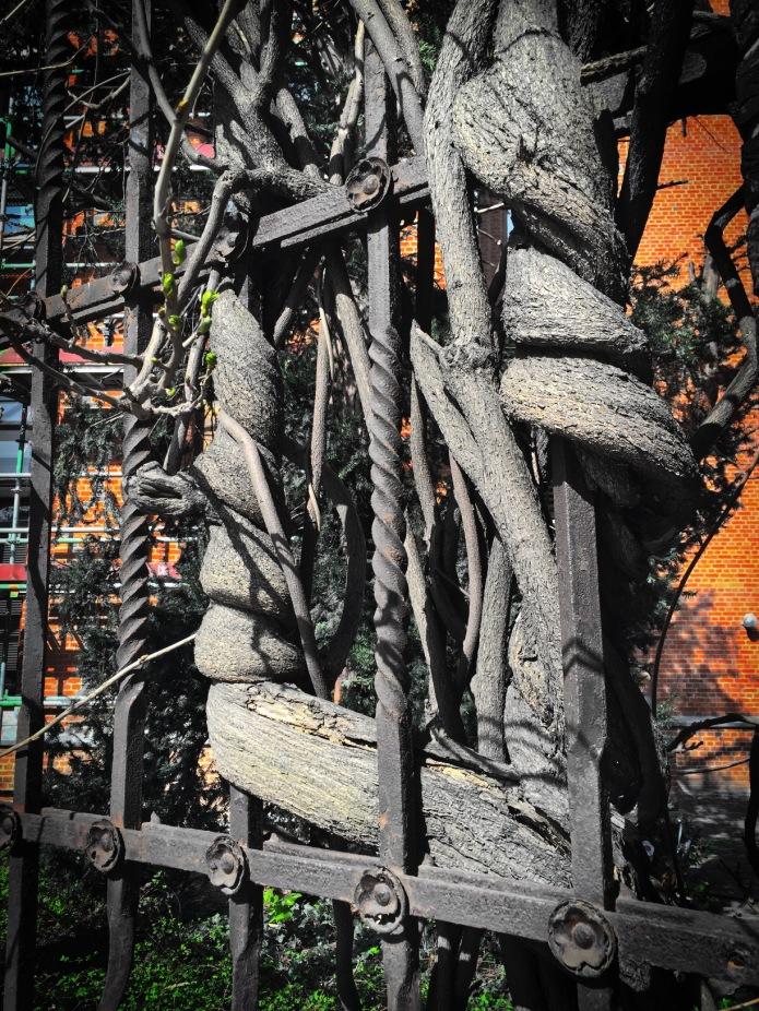 innige-verstrengeling-leuven-andreas-vesaliusstraat-16-april-2015-foto-hendrik-elie-vanden-abeele-te-voet-in-de-stad